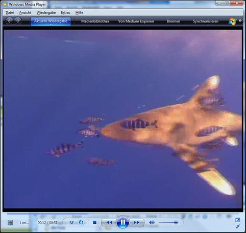 Hier kommt der Hai